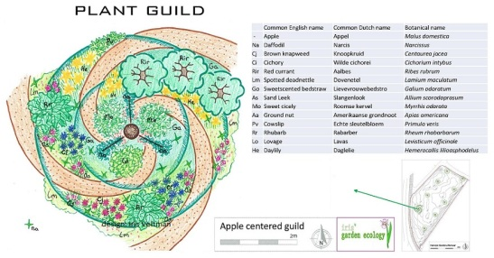 plant-guild-apple-appel-gilde-permacultuur-companion-border-uitleg