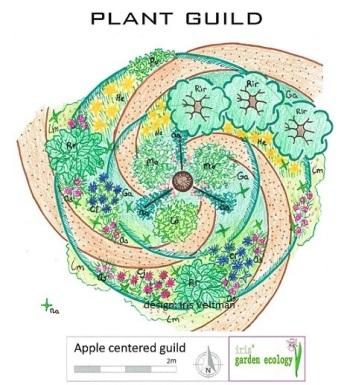plant-guild-apple-appel-gilde-permacultuur-companion-border