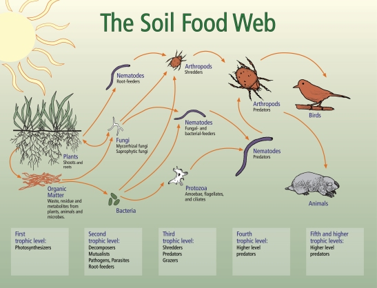 the-soil-food-web-usda