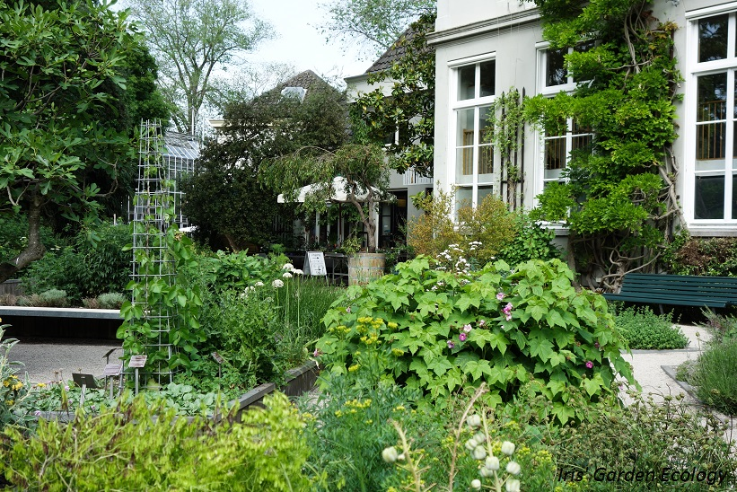 Botanische Tuin Amsterdam : Hortus botanicus amsterdam als achtertuin u tuinenstruinen