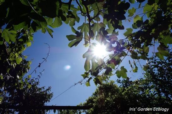 Tuinverkenning u2013 vóór je gaat ontwerpen aanpassen iris garden