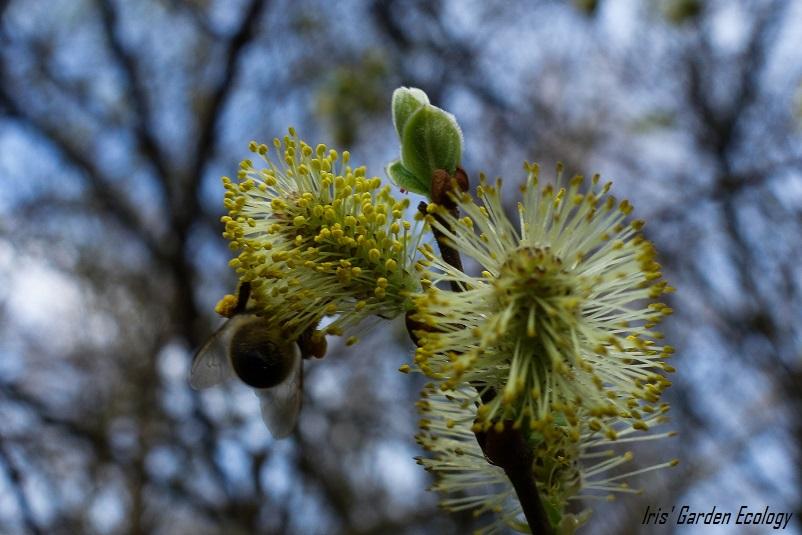 10x Bloeiende insectenplanten: april