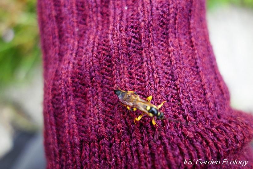 Wespen zijn (meestal) helemaal niet vervelend!