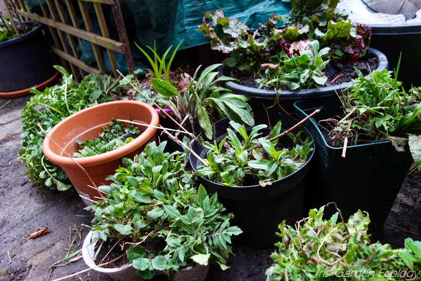 Tuindagboek: Een mooie tuin minder