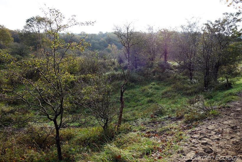 Ecologische successie in de duinen (deel 2: foto's)