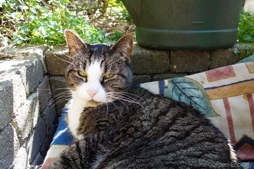 Katten in de tuin (houden)