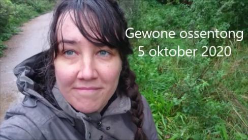 Gewone ossentong – een nuttig plantje [vlog]