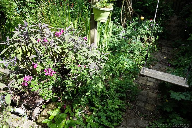 Waarom bodemdiversiteit onmisbaar is voor je tuin (en de natuur)